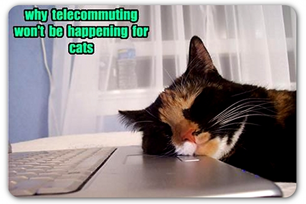 telecommuting-cats.jpg